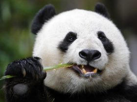 Schønherr fornyer landskabet i København Zoo